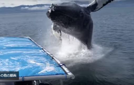 クジラが超接近!これは威嚇か!!???