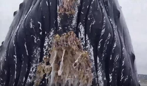 クジラがブリーチングしながら船に衝突してくる動画!!