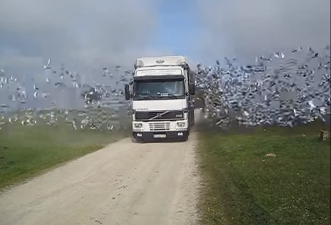 トラックから大量のハト(鳩)がでてくる動画!!!