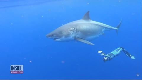 世界最大のホオジロザメ(鮫)をハワイで発見!サメが人を襲わない動画と説明!!
