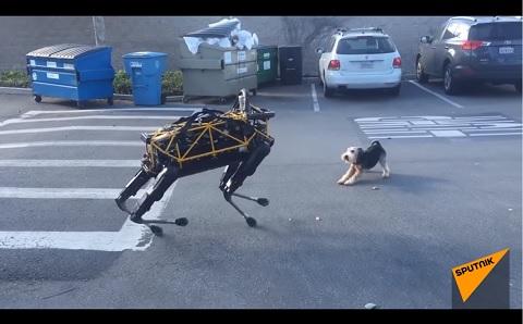 ロボット犬へ立ち向かう勇敢なワンちゃん!!
