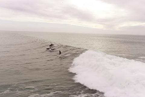 ドローンで撮影された、イルカとサーフィンしている!【癒し動画】