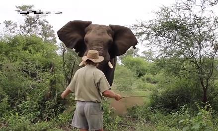 野生のアフリカゾウと人との睨みあい狂暴化するとき!その時、人間は!?